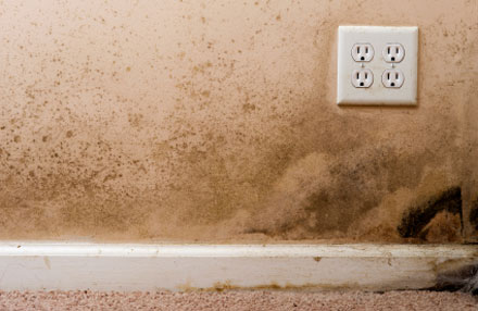 Mold_Removal_NewYork_NewJersey